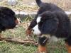 bilder-19-6-2011-herr-merten-172