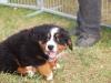 bilder-19-6-2011-herr-merten-146