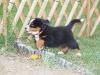 bilder-19-6-2011-herr-merten-153