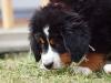 bilder-19-6-2011-herr-merten-028