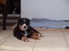 bilder-19-6-2011-herr-merten-125