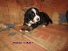 rde-blau-13-05-2011-liegt