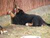bilder-13-6-2011-herr-merten-090
