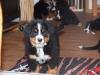 bilder-19-6-2011-herr-merten-114