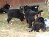 bilder-13-6-2011-herr-merten-053